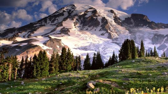 blooming_wildflowers_mount_rainier_washington_wallpaper-HD